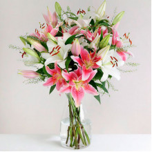 Mix of Lilies Extra