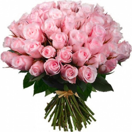 51 pink roses